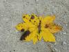 slikanje-z-naravnimi-materiali0011