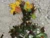 slikanje-z-naravnimi-materiali0012